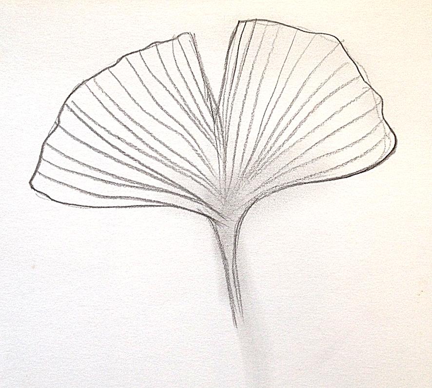dessin feuille de genko